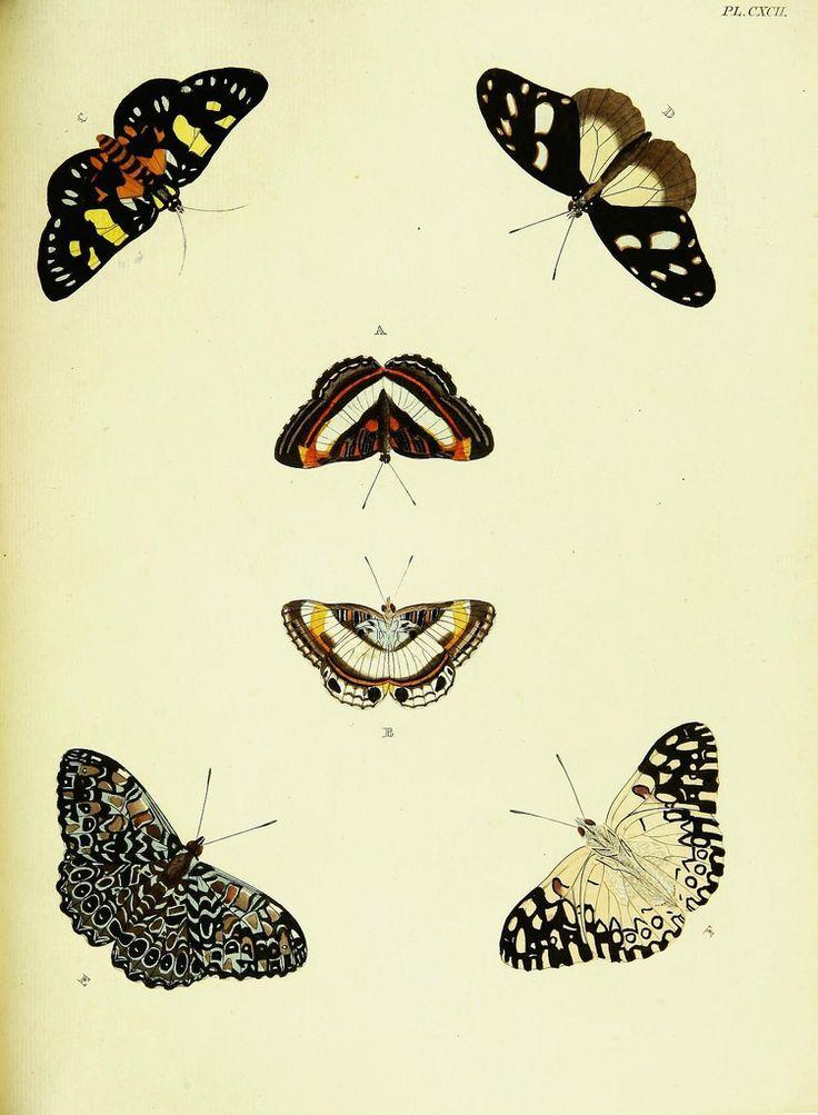 De uitlandsche kapellen voorkomende in de drie waereld-deelen, Asia, Africa en America,. Amsteldam,Chez S. J. Baalde;1779-1782.. biodiversitylibrary.org/page/42111671
