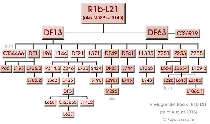 Phylogenetic tree of haplogroup R1b-L21/M529 (Y-DNA) - Eupedia