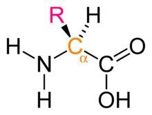Acide aminé — Wikipédia