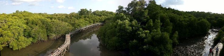 Mangrove Forest, Denpasar