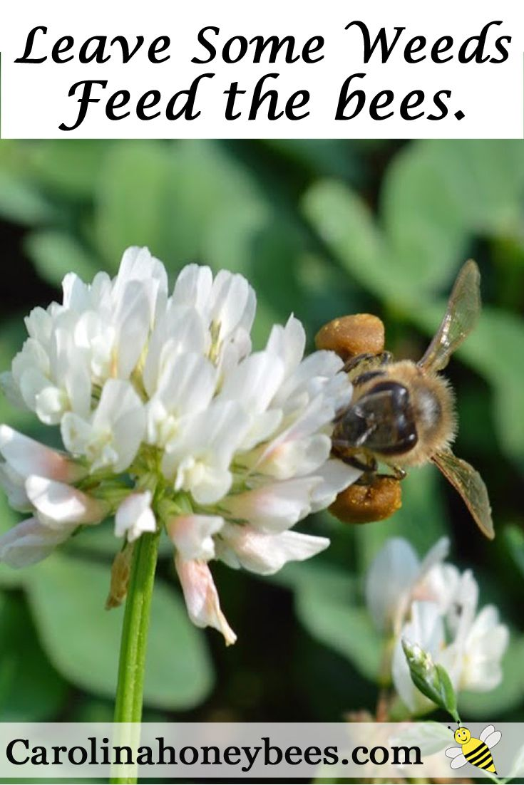 33052 best beekeepers info images on pinterest bee keeping
