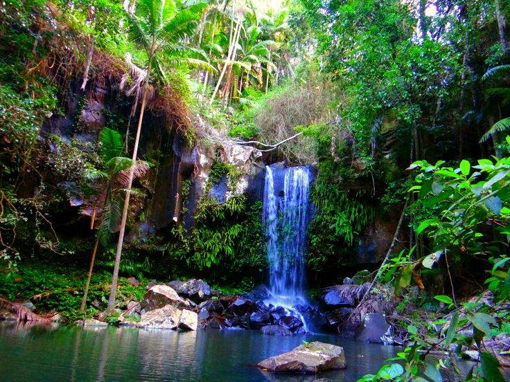 Curtis Waterfall, Mt Tamborine #Queensland #Australia