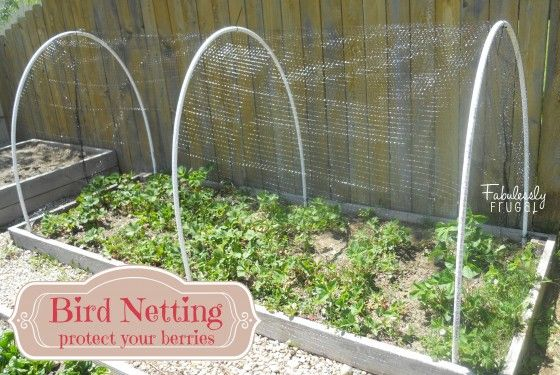 Keep the Birds out  your Berries in! Tutorial on how to do a bird netting for your berry patch. Find local schools and teachers on EducatorHub.