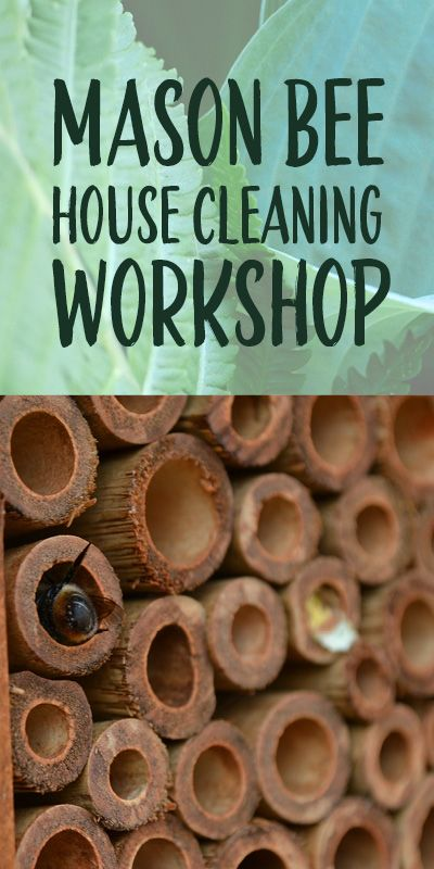 Mason bees need a clean nest for optimal health, and this hands-on workshop shows you how to do it and why it is important.