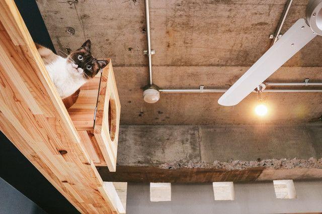 「猫ぐらし」のフリー写真素材