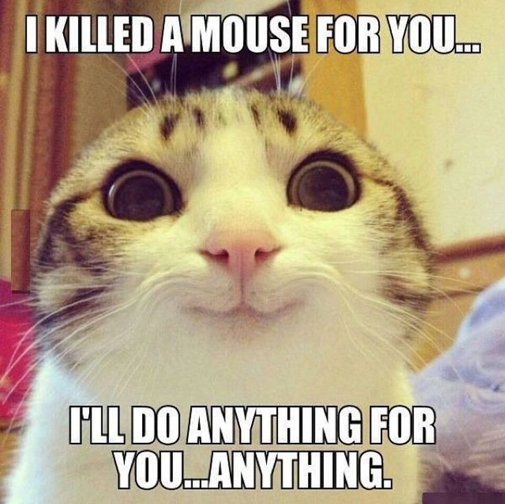 Really little kitty? Ok, let me get my kill...I mean to do list