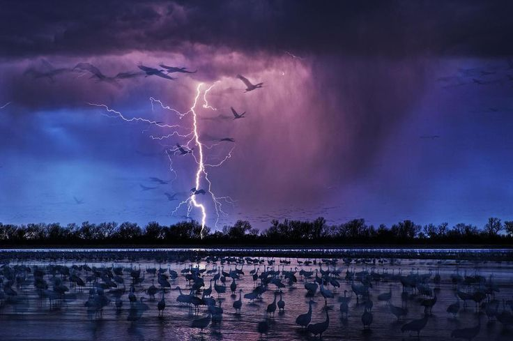 Signed prints from our photographers are on sale now for a limited time. Visit the link in profile to see the full collection of images in honor of #EarthDay. Sale ends on April 22nd. Photo by @randyolson: The aquifer-fed Platte River is a roosting area for roughly 413,000 sandhill #cranes as they #migrate between northern #Mexico and #Siberia. This shot was taken as an evening #storm rolled into the #Nebraska plains just as the birds were beginning to land for the night. It was published in…