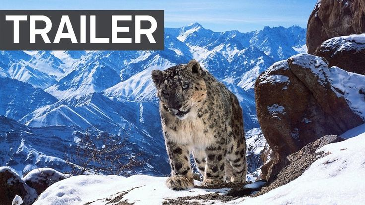 My fellow American Netflix users, just a heads up that Planet Earth II is now out on Nextflix. Here is a link to the trailer on Youtube because I gottah put a link in.