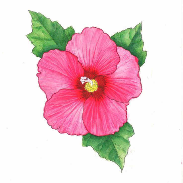Mugunghwa, rose of Sharon