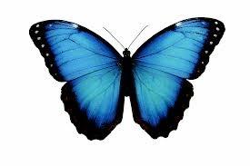 sommerfugl - Google Search