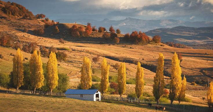 Coyhaique And Puerto Aysén. Marvel With Nature Virgin Of This Area Located In The Heart Of Patagonia. Enjoy Green Forests.