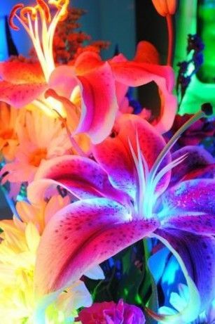 elements of glowing flowers - photo #47