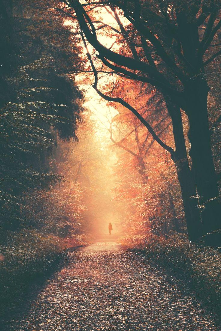"""lsleofskye: """"Forest Dreams """""""