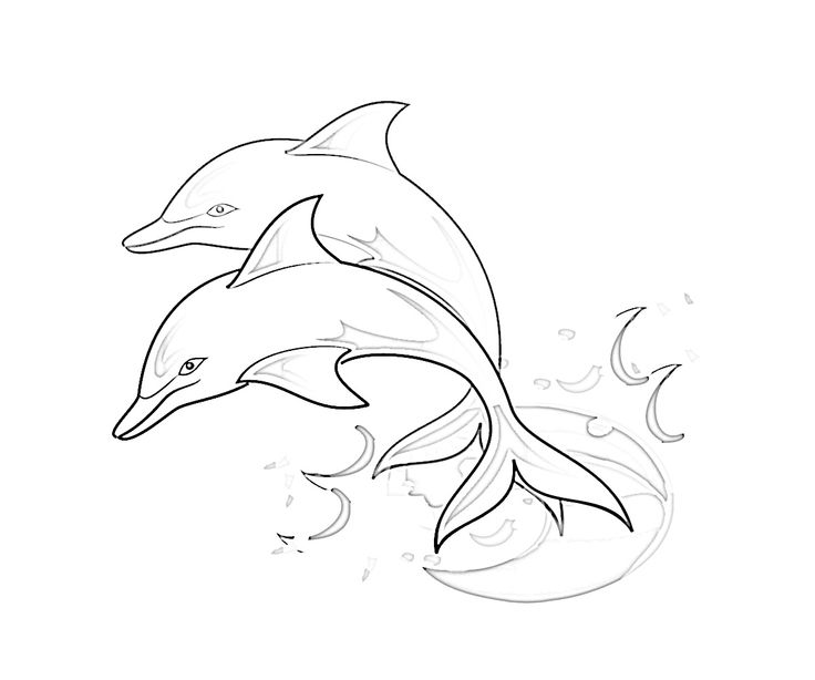 Winter and hope the dolphin coloring pages ~ 104 best Dolphins images on Pinterest   Common dolphin ...