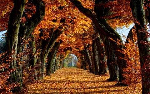 fa ősz út