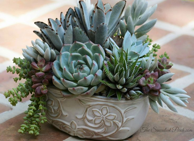 Nice succulent arrangement from the Succulent Perch.