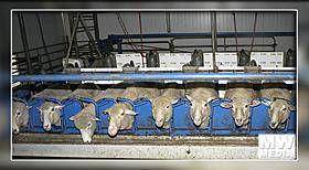 Kangaroo Island - Island Pure Sheep Dairy
