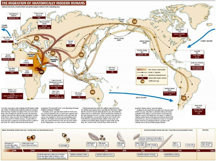 The migration of anatomically modern humans - Black Educator