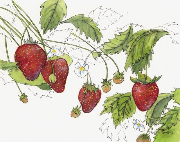 177 best images about Watercolor Fruit & Vegetables on Pinterest ...