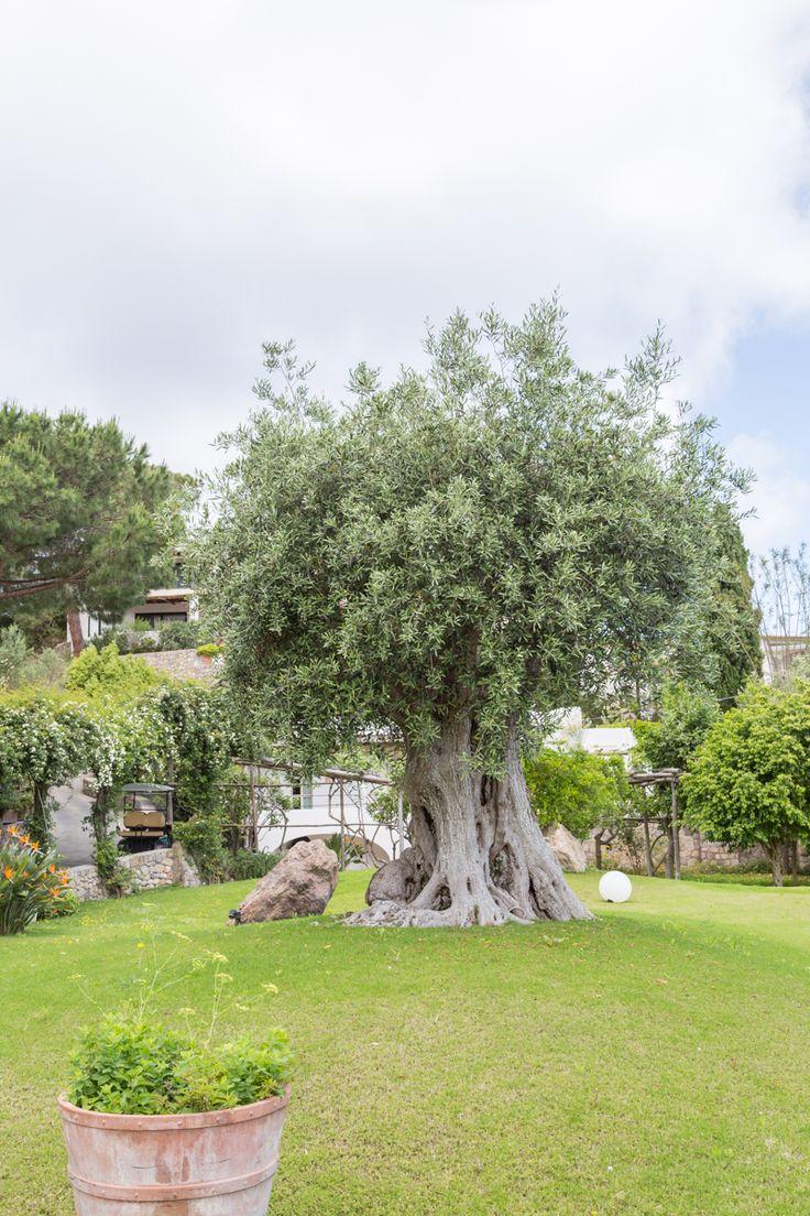 Garden & Villa Resort, Hébergement à Ischia
