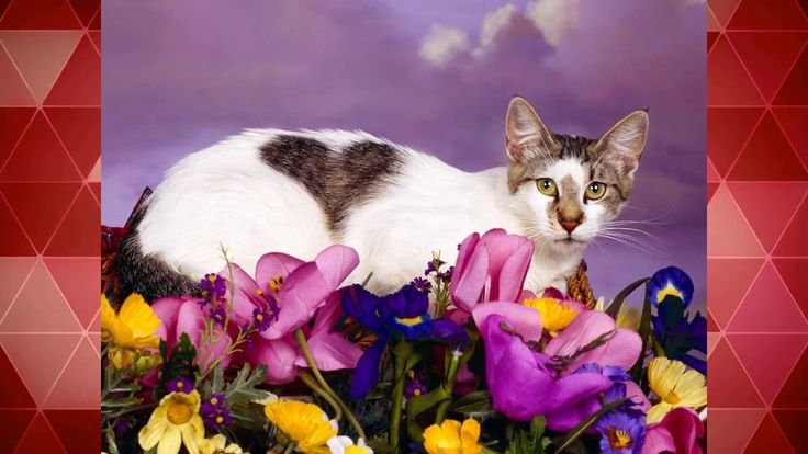 10 Most Beautiful Cats Image- most beautiful cat most beautiful cats in the world