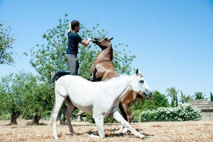 horse-sinphony-biza-style-001