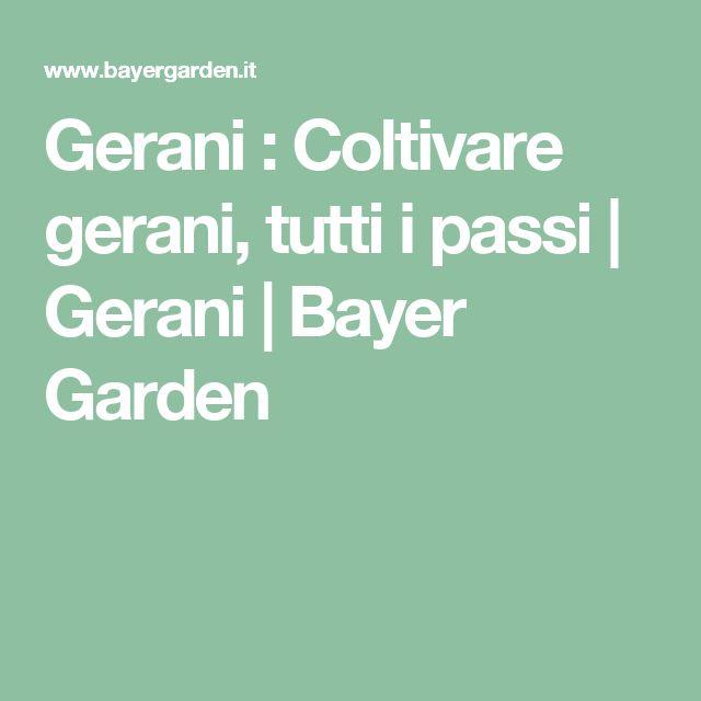 Gerani : Coltivare gerani, tutti i passi | Gerani | Bayer Garden