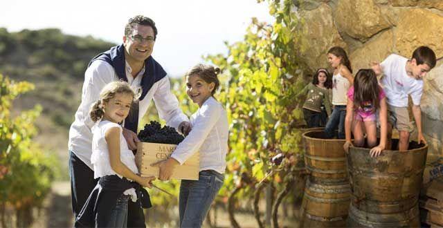LABORES DE LA BODEGA Durante todo el año existen interesantes tareas que se pueden realizar en las viñas así, según la época en la que viajemos, se podrá vendimiar, racimar, podar, ver como nacen los racimos de uva, deshojar…