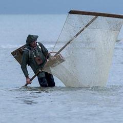 Brown Shrimps harvest season openes in Bray-Dunes