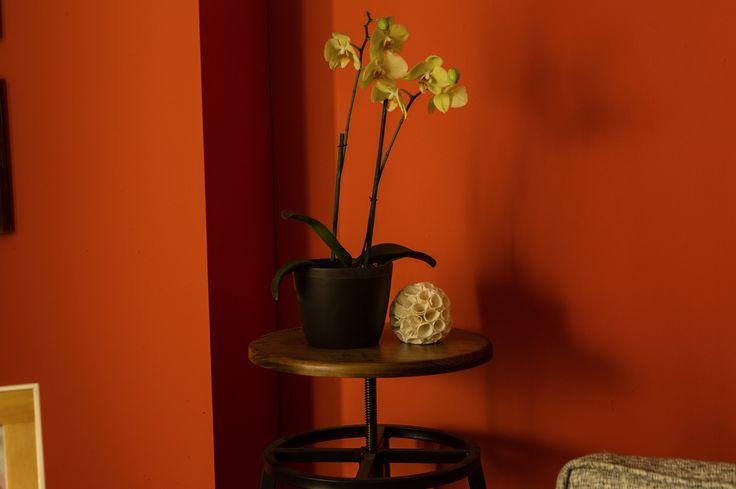 Dale acentos de colores a tu sala con plantas para interiores, como la orquídea.