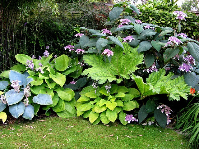 Three Hostas, Gunnera, Bamboo and Hydrangea aspera by emagen,