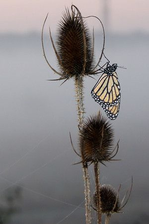 #Butterfly on the water near #FortWayne Indiana. #Frontier    Frontier.com