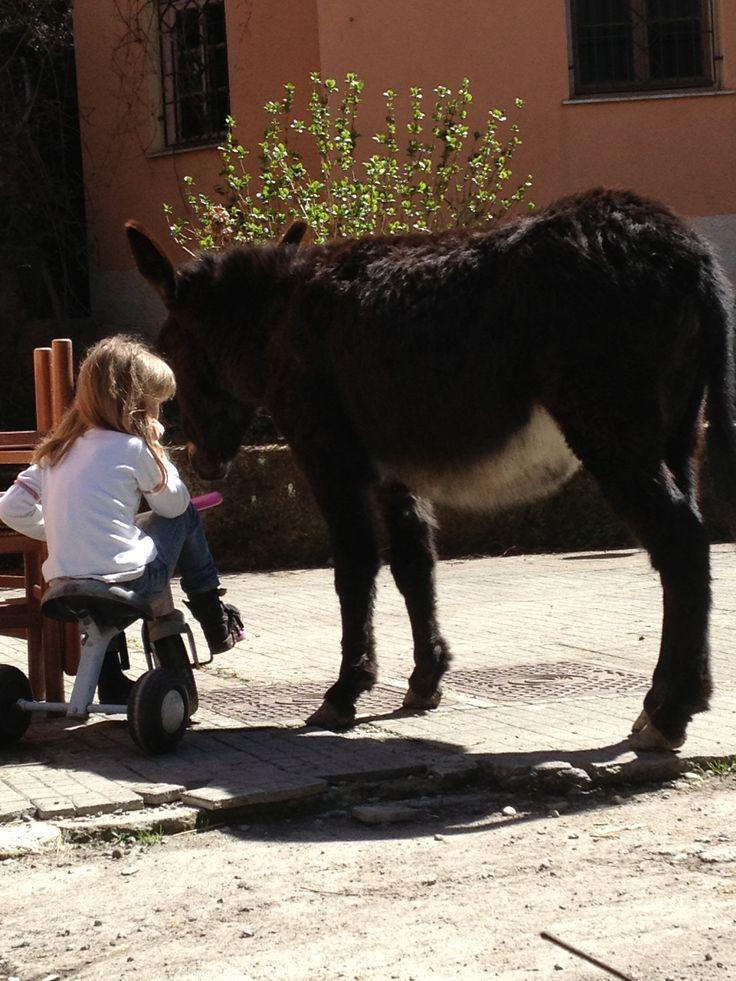 Sul triciclo con gli asini