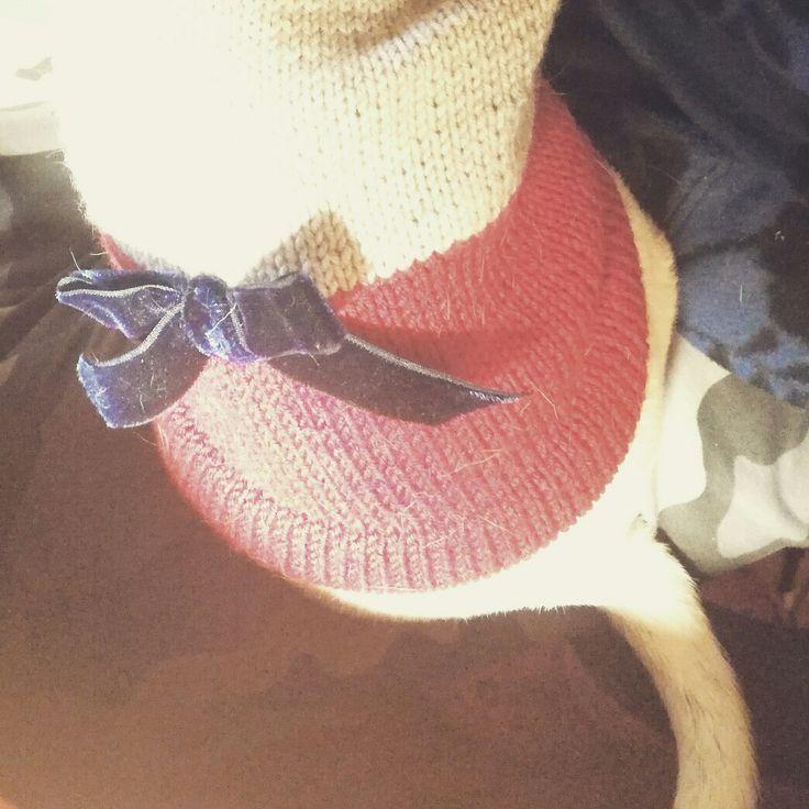 Il grigio è di gran moda, ma il rosso mi dona molto! Con il fiocchetto in velluto blu, poi, mi sento davvero chiccosa! :-)