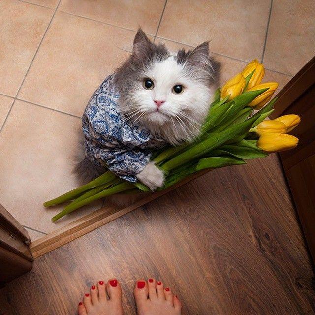 cat with flowers - Szukaj w Google