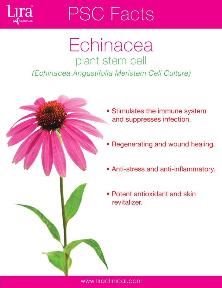 Discover the amazing benefits of Echinacea! This plant stem cell is also used in many of our ICE products.