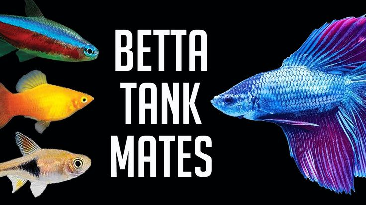 240 best creative indoor outdoor fishtanks images on for What fish are compatible with betta fish