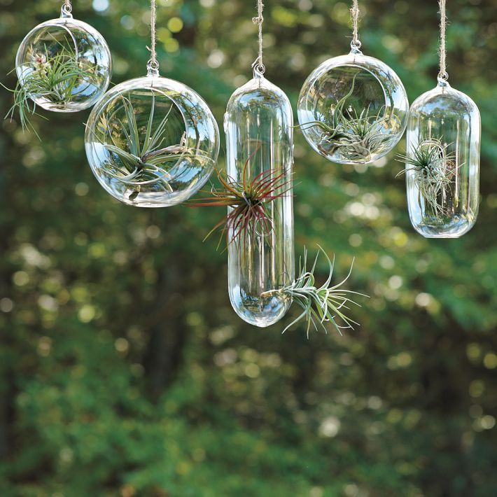 West Elm sells these glass bubble planters.  They are great for your air ferns and for people who don't  have green thumbs!