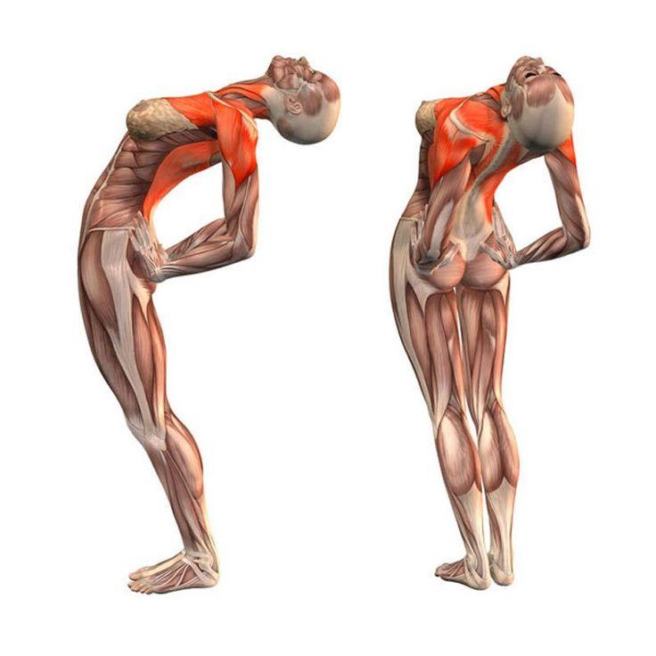 4 упражнения для здоровья позвоночника