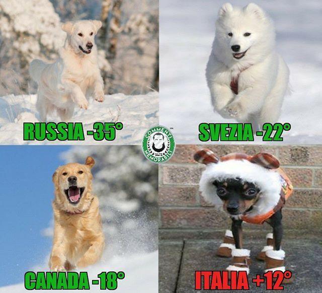 Oltre 25 fantastiche idee su foto di cani divertenti su for Idee di estensione a livello diviso