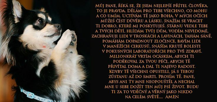 psí modlidba