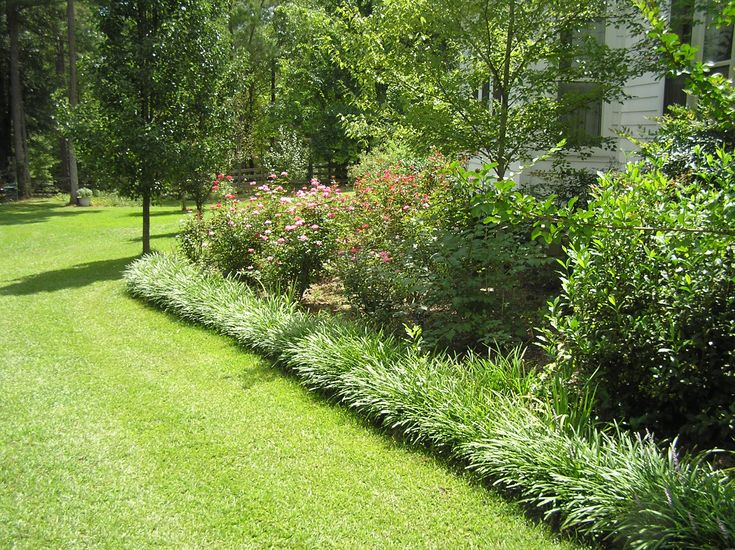 Monkey grass bordering home landscaping ideas pinterest for Border grasses for landscaping
