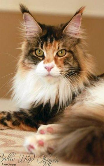 I am quite handsome, aren't I?