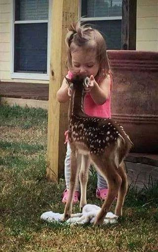 Hold on.... I have something Special for you to Eat !!!!!! MUCH THIS LITTLE GIRL AN FAWN IS SO PRECIOUS AN BEAUTIFUL. TOGETHER