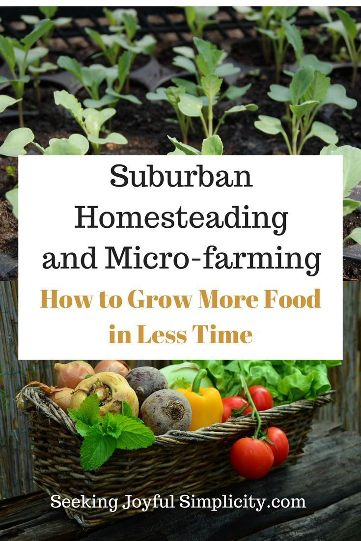 Creative environments landscape co edible gardens - Strategies And Tips For The Busy Gardener And Homesteader Wanting To Grow More Food With Less