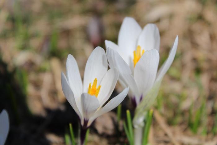 Frühling #Natur #tiroleroberland