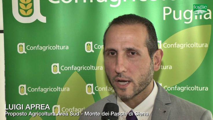 FOGLIE TV - Accordo fra Confagricoltura Puglia e il Monte dei Paschi di ...