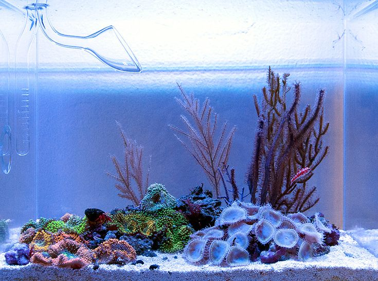 136 best images about reef tanks and setups on pinterest for Aquarium recifal nano