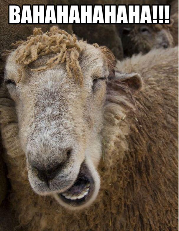 Bahahaha Sheep Frequently Used Memes Funny Sheep