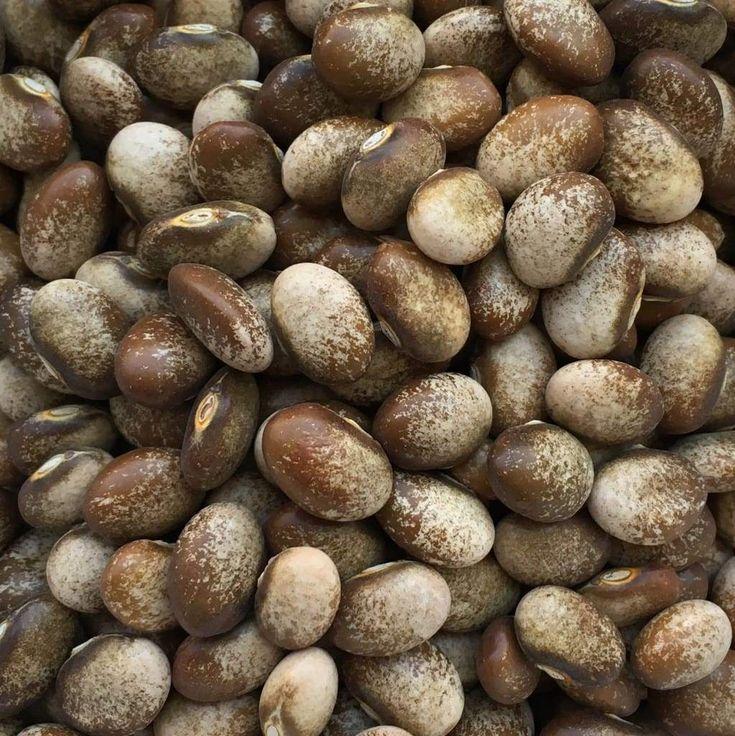 pdf phaseolus bean improvement in tanzania 19592005 - 735×736